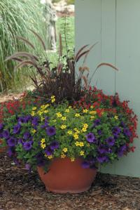 Mixed Container Proven Winners 25